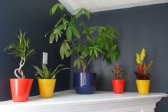 Plantas Artificias