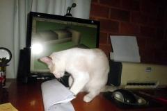 pet_home_office_27