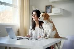 pet_home_office_28